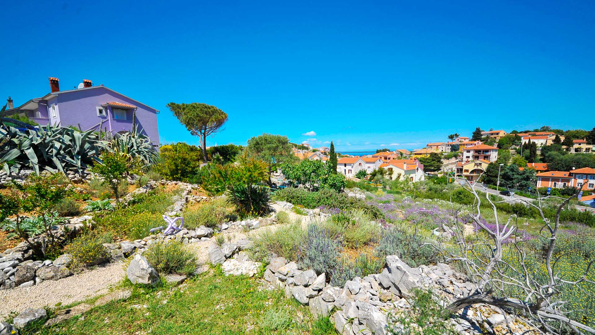 Croatia Itinerary Cres and Lošinj Sage Fields